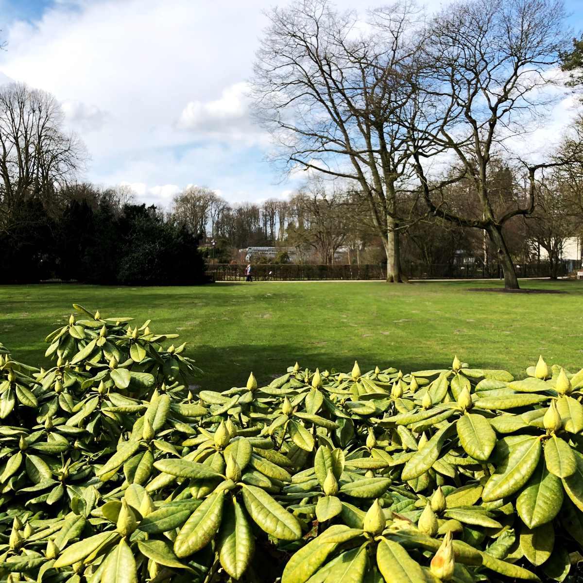 Rhododendrongarten